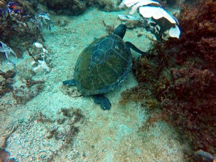 Mergulho em Arraial do Cabo - Meu Mundo Por Aí